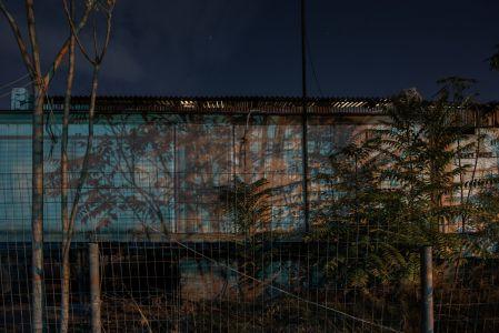 Rea Papadopoulou - Dark Tree, Albero Oscuro