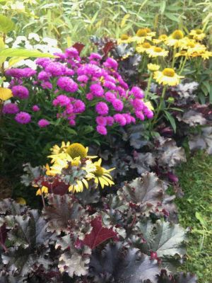 Euchera, Chrysanthemum E Echinacea