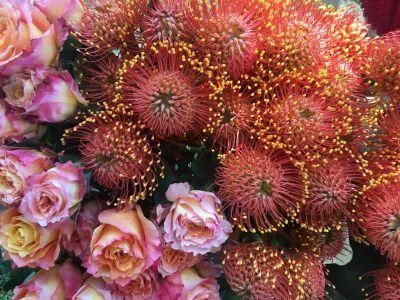 Rose E Protea