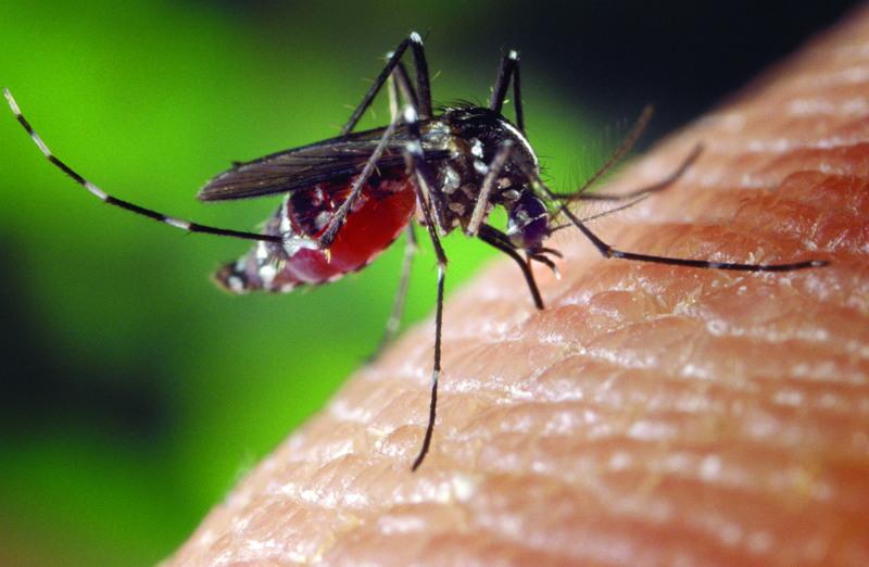 foto zanzara che punge